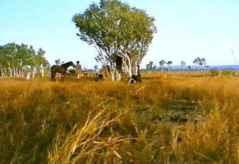 Arafura Swamp
